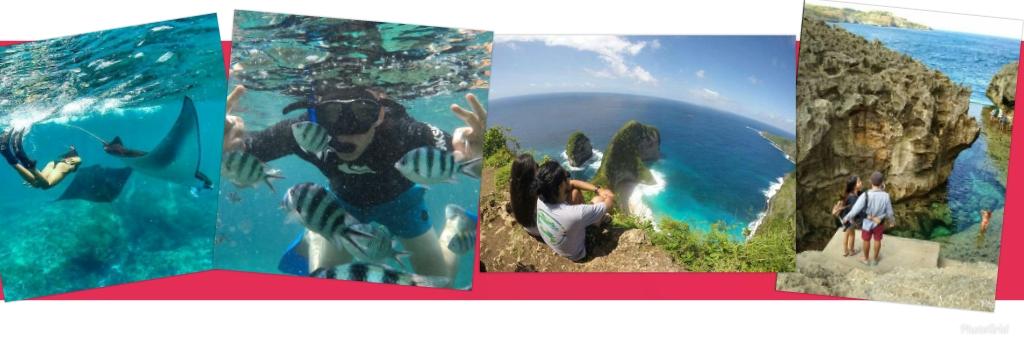 Penida Snorkeling & Tour Photo atasnya saja