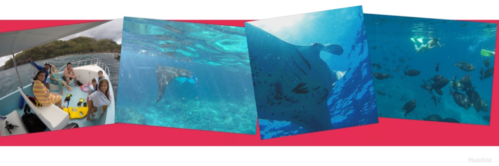 Manta Ray Trip Package Photo atasnya