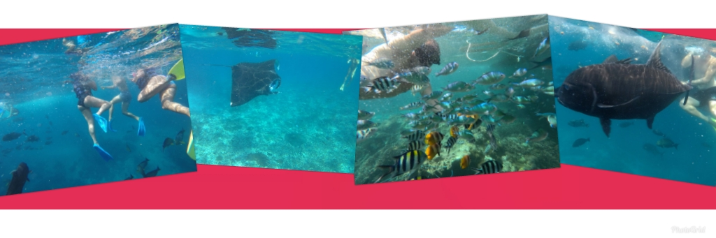 Manta Ray Trip Package Photo bawahnya